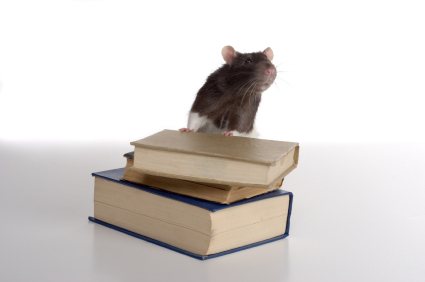 Mouse_on_Books_for_Library